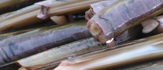 Recettes des couteaux de mer : en marinière, gratinés, poêlés, en salade